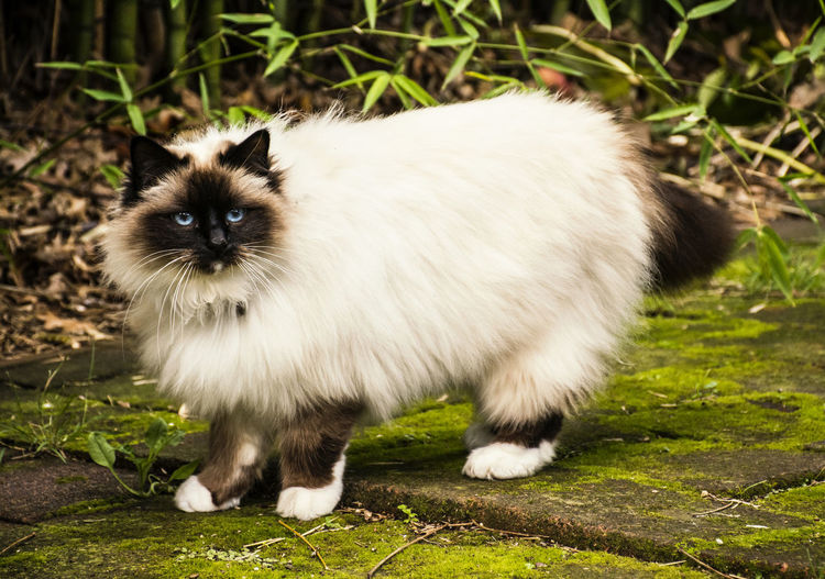 Portrait of cat standing on grass