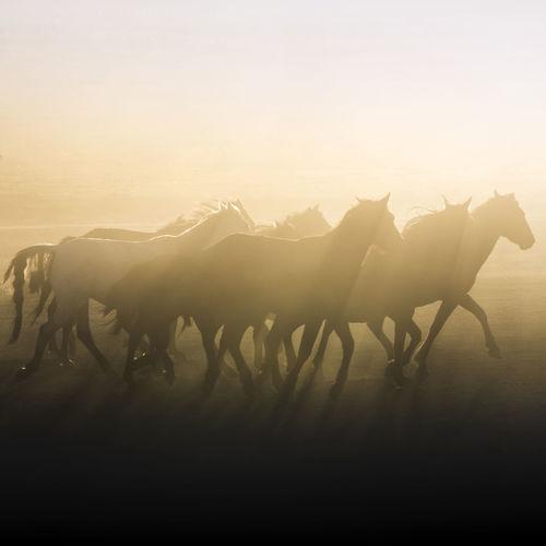 Silhouette horses running on field against sky during sunset