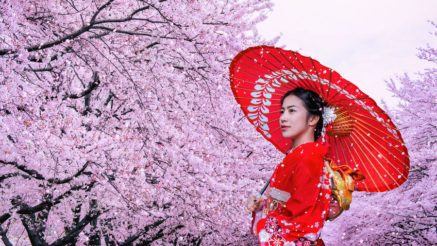 Asian woman wearing japanese traditional kimono and cherry blossom in spring, Japan. One Person Real People Clothing Red Umbrella Women Protection Young Women Plant Nature Lifestyles Flower Tree Standing Young Adult Leisure Activity Pink Color Flowering Plant Outdoors Cherry Blossom Springtime Beautiful Woman