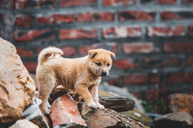 Puppy standing on rocks outdoors