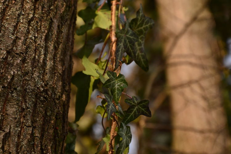 Beauty In Nature Branch Close-up Day Growth Leaf Nature No People Outdoors Plant Tree Tree Trunk