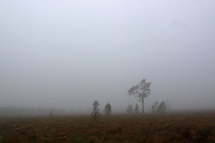 Trees On Field Against Foggy Weather