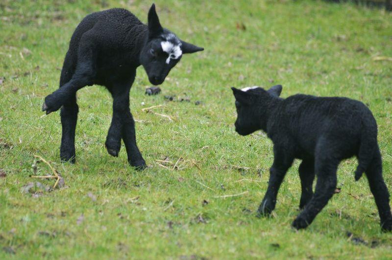 Spring2015 Spring Lamb's EyeEm Nature Lover Nature_collection Enjoying Nature Dreaming My Life Away ♥ Taking Photos