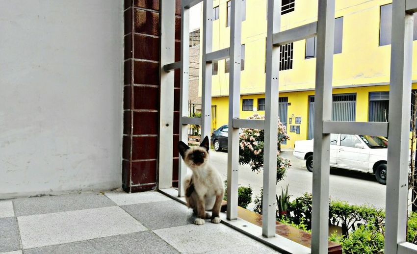 Cataline Pets