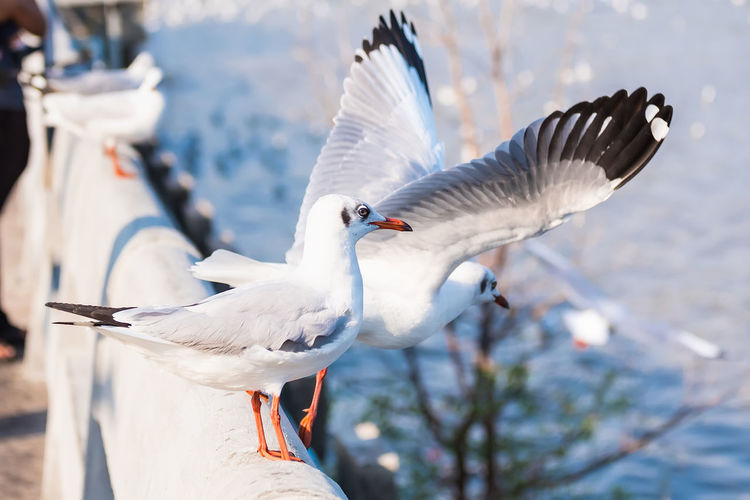 Close-up of seagulls flying