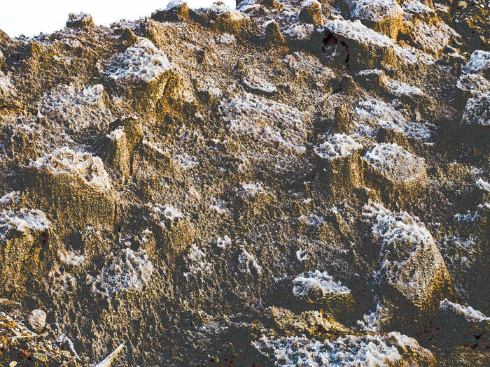 Rock with Salt