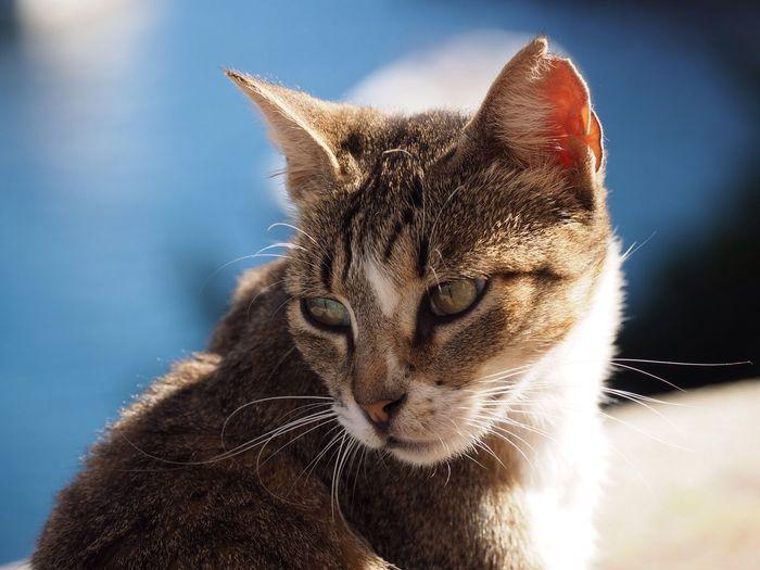 Katze Cat Animal Themes One Animal Mammal Feline Domestic Animals