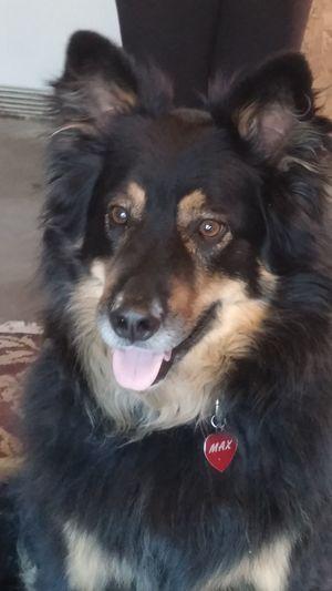 Lovemydog My MAX