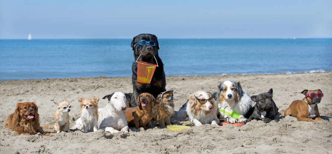 Dogs sitting on sand at beach during sunny day