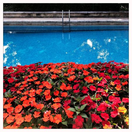 Tranquility Freshness Things That Are Blue Things That Are Red Architecture Simplicity Urban Geometry Architectural Detail Red Blue Milano Villa NECCHI Flowering Plant Swimming Pool Outdoors Water Flower Pool EyeEmNewHere
