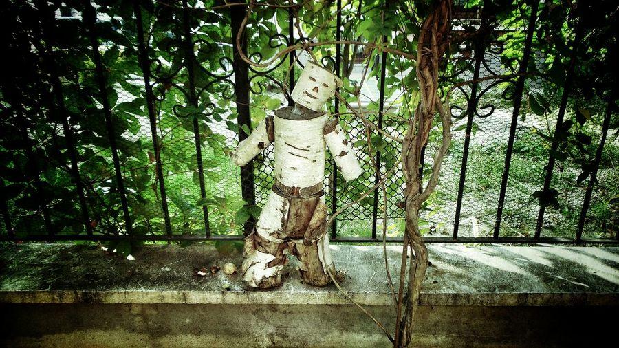 My Photography Treeman Hello World
