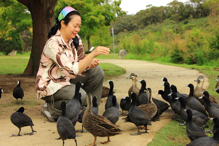 With wild ducks and Australian Coots in Wenworth Falls Lake in Blue Mountain National Park Australia. Australia Australia Birds Australian Coot Be. Ready. Australia & Travel Bird Flock Of Birds Large Group Of Animals Travel Destinations Wild Ducks