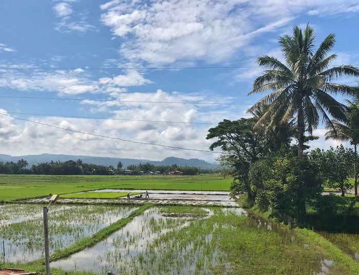 If you ate today, thank a farmer. EyeEmBestPics EyeEm Selects Eyeem Philippines Plant Tree Sky Cloud - Sky Landscape Field Agriculture Scenics - Nature Beauty In Nature Green Color Nature Rural Scene Land Tranquil Scene Farm Environment Day