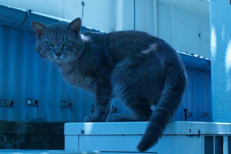 Okinawa Town Of Boss オキナワ Japan Snap スナップ 日本 沖縄 猫 Cat ねこ Cute 可愛い 街のボス
