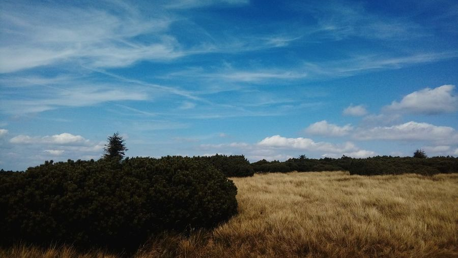 Tree Cloud - Sky Field Agriculture Sky Day Nature No People Outdoors Rural Scene Landscape Beauty In Nature Growth Freshness