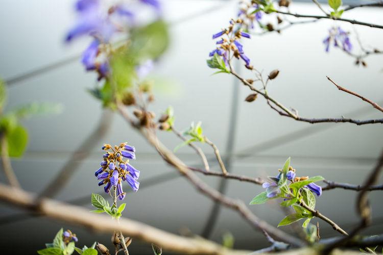 Botany Botanic