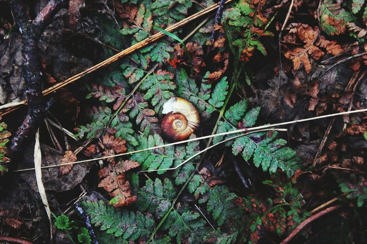 Nature Wildlife Close-up Outdoors Grass Plant Growth Forest Snail Snails Helix Vscocam The Great Outdoors - 2016 EyeEm Awards Original Experiences Fine Art Photography Adventure Club On The Way TakeoverContrast