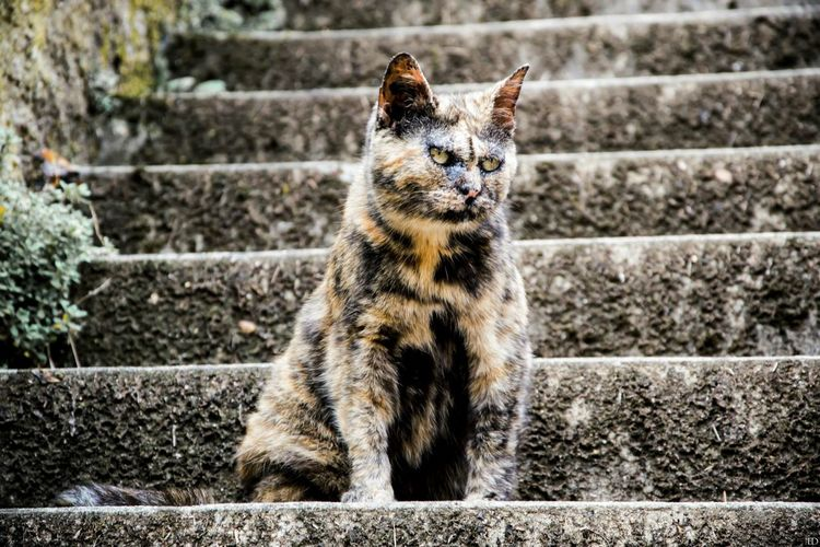Cat Chat Stairway Escalier