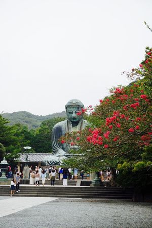 Great Buddha Big Buddha Big Buddha Temple Buddha Buddha Statue Buddhism Buddhist Temple Cultures Day Flower Great Buddha Japan Japan Photography Japanese Culture Kamakura Kamakura Japan Meditation Outdoors Religion Sky Statue