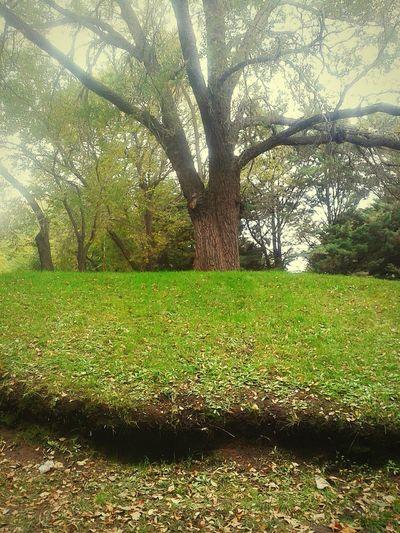 Permite que la naturaleza te enseñe la quietud Madrenaturaleza