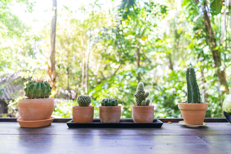 Close-up of potted plants on table in yard