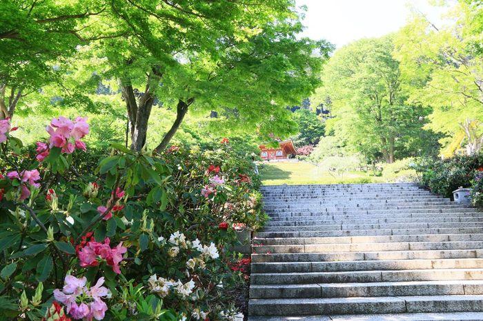 勝尾寺 箕面市 Parks And Recreation Temples Flowers Taking Photos Walking Around