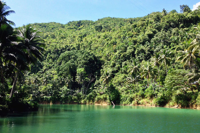 Loboc River Bohol Holidays Philippines Sightseeing Travel Travel Photography Vacations Wanderlust Beauty In Nature Clear Sky Day Explore Flora Green Growth Itsmorefuninthephilippines Landscape Loboc Loboc River Lush Nature No People Outdoors Travel Destinations Tree Vegetation Water