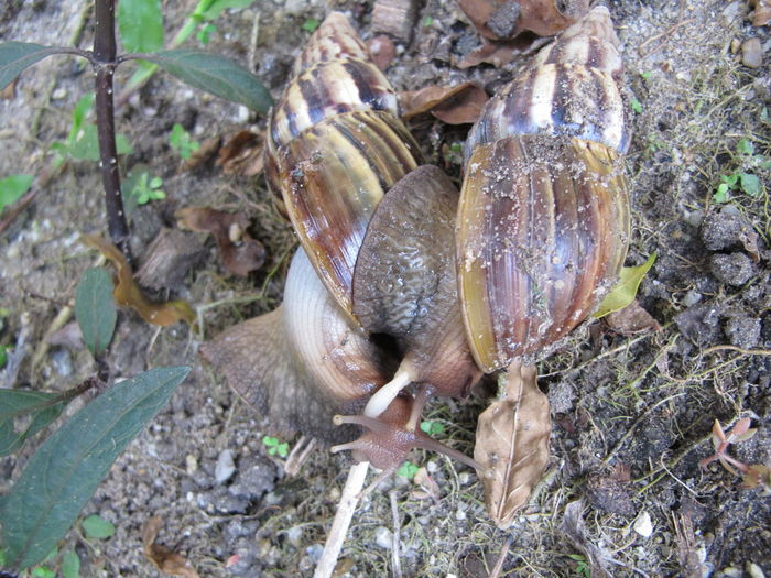 Animal Themes Beauty In Nature Close-up Day Fragility Freshness Gastropods Leaf Nature No People Outdoors Snail
