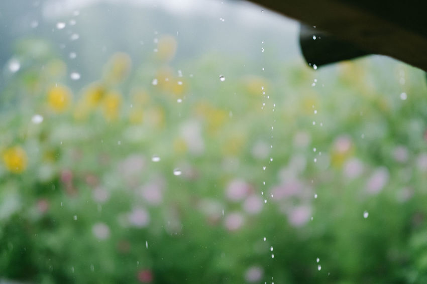 Rain Rain Drops Beauty In Nature Close-up Day Drop Freshness Green Color Nature No People Outdoors Water Wet The Week On EyeEm