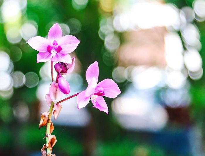 Flowering Plant Flower Plant Pink Color Freshness Focus On Foreground Close-up Petal Flower Head Nature