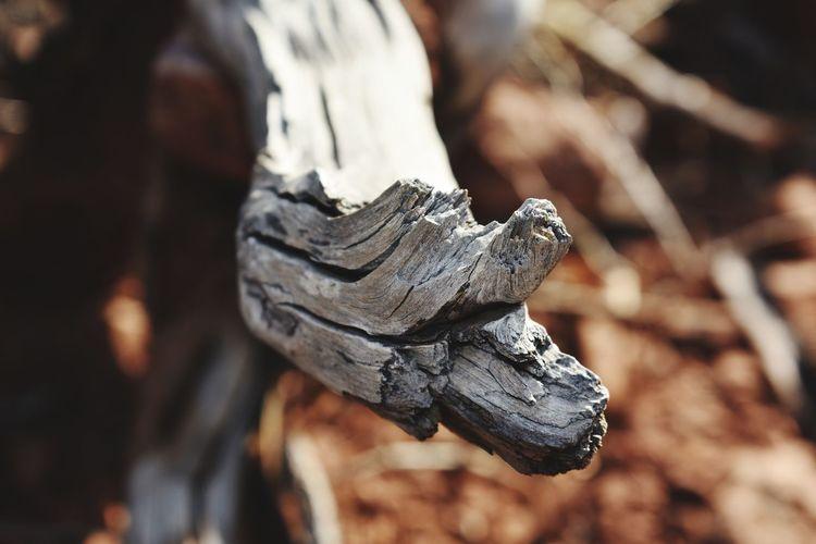 Close-up of a sculpture