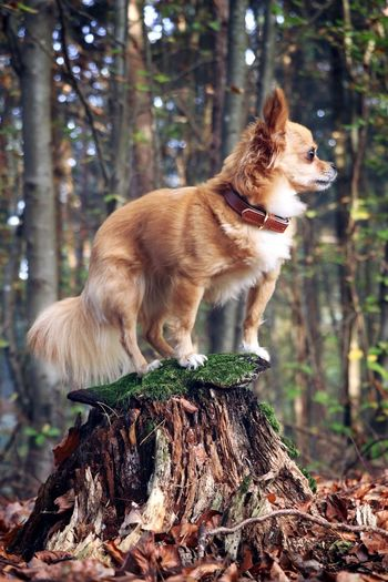 Dog Pets Tree One Animal Forest Domestic Animals Animal Themes No People Mammal Outdoors Full Length Close-up Day Tree Trunk Nature WoodLand