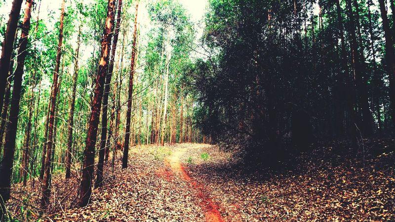 SlenderMan Trees Jungle Way