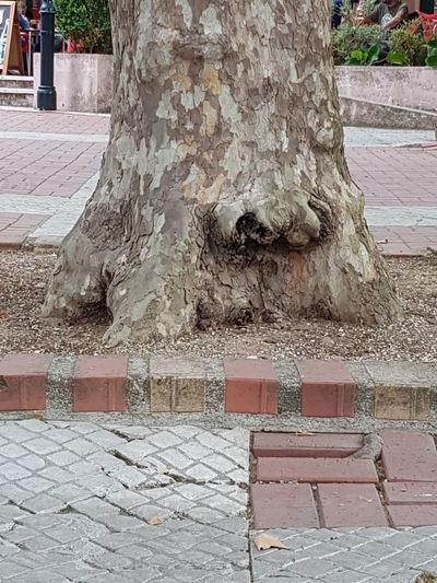 Sculpture on tree trunk