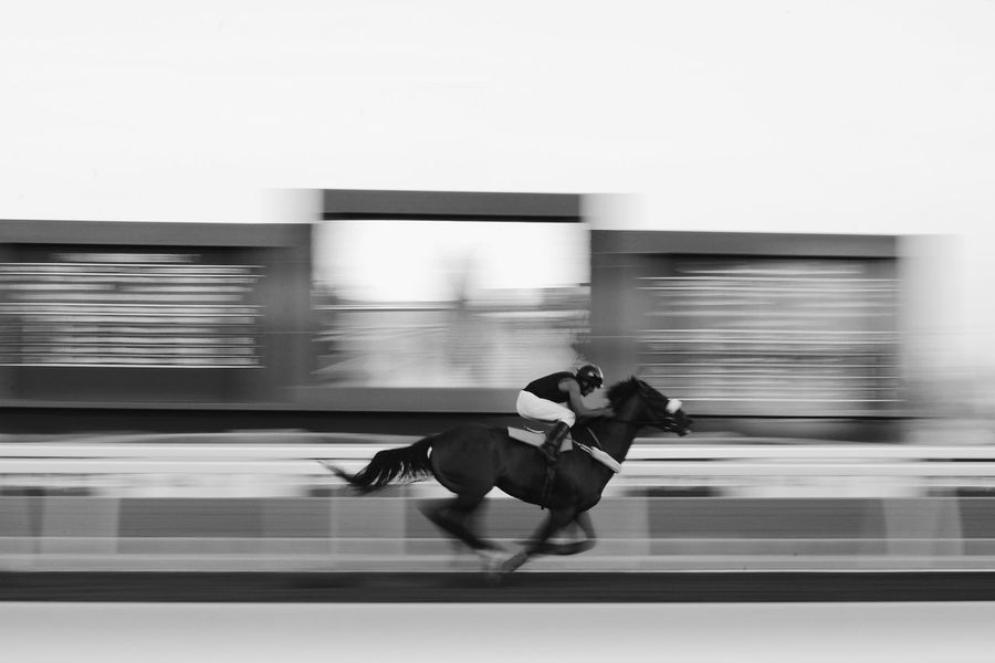Faces Of Summer Four Legs And A Tail People Watching Race Day Sprint Bw_collection Panning