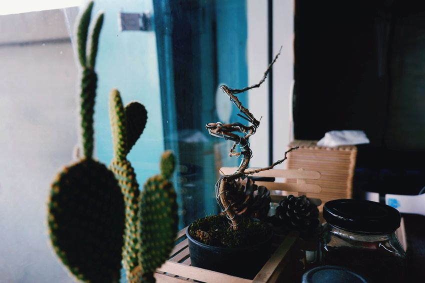 No People Indoors  Potted Plant Window Plant Day Cactus