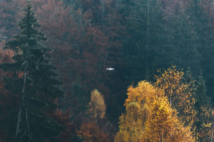 Drone with camera flying over trees