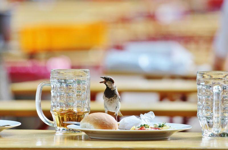 Bier Biergarten Day Focus On Foreground No People Prenzlauer Berg Spatz Vogel Market Reviewers' Top Picks