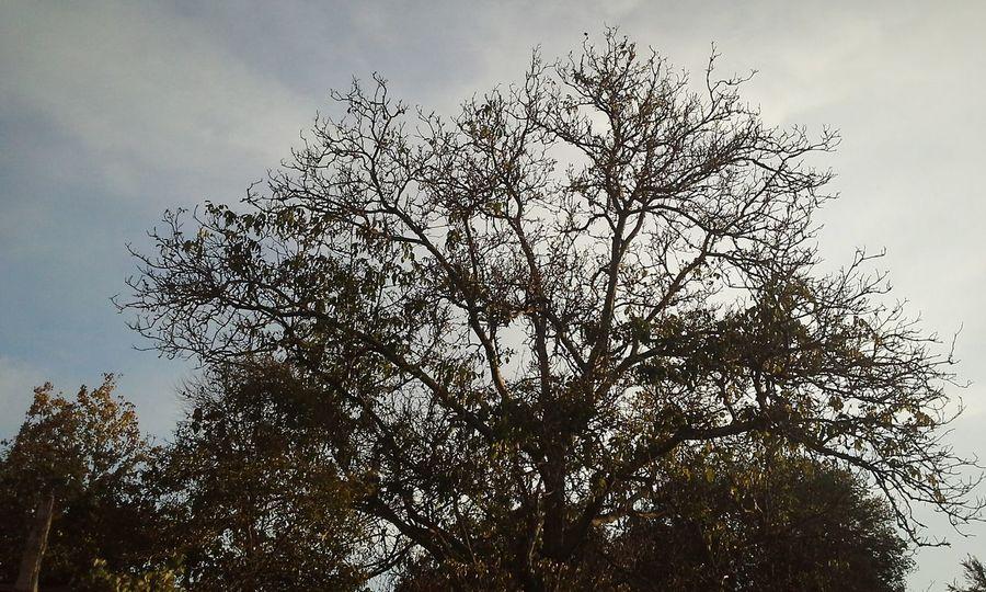 Arbol. Eyeemphotography EyeEm Gallery EyeEm Nature Lover Nature Photography Beautiful Nature Nature_collection Naturaleza Trees Collection Old Tree