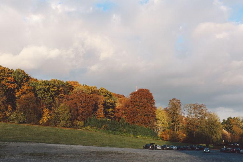 Annevoie Autumn Colors Day Forest Garden Hill Landscape Les Jardins D'Annevoie Nature No People Outdoors Tree