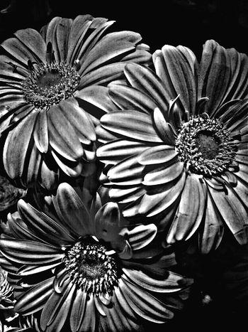 Streamzoofamily TheVilleAtEyeem Macroclique EyeEmNatureLover#flower#Nature_collection #ForTheLoveOfBlacknWhite