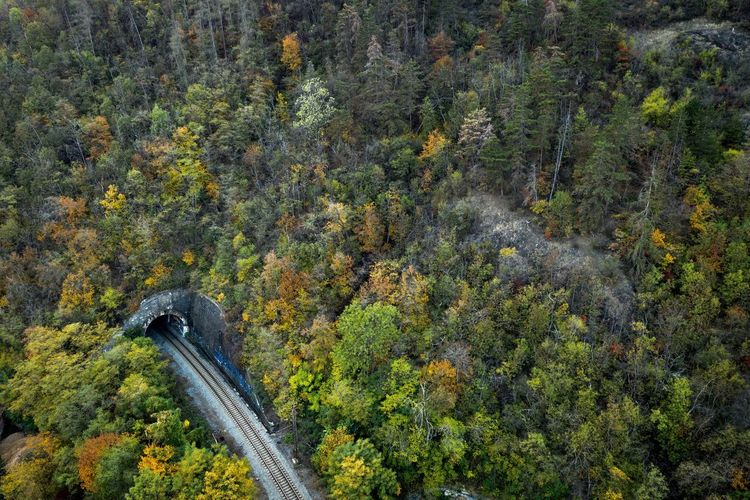 Train tunnel, take 2 Minimalism Graffiti Forest Tunnel Railroad Track High Angle View Nature Green Color Day No People Land Tranquility Spraying