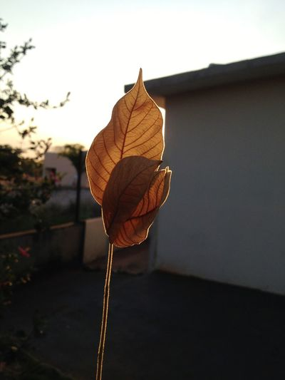 Nature Leaf No People Autumn Plant Day Growth Beauty In Nature Fragility Sky Flower