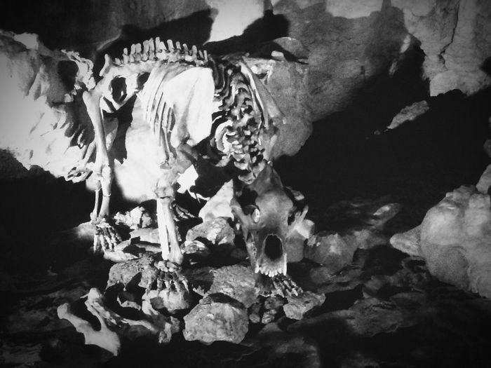 Bear Sceleton Cave Bärenhöhle Ancient Dark Place Grave