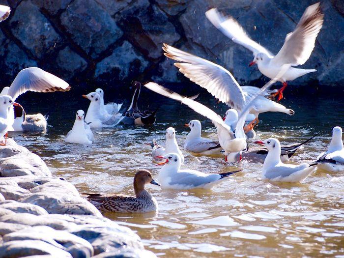 乱舞 Birds Bird Photography Water Wild Dance