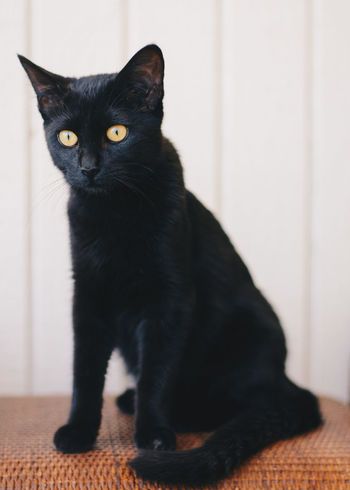 Black Cat Animal Themes Black Black Color Black Kitten Cat Close-up Day Domestic Animals Domestic Cat Feline Indoors  Kitten Mammal No People One Animal Pets Portrait Sitting Yellow Eyes