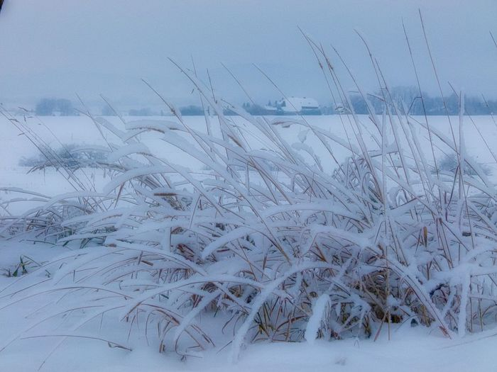 Soft Beauty In Nature Close-up Cold Temperature Day Field Frozen Grass Growth Nature No People Outdoors Plant Scenics Sky Snow Tranquil Scene Tranquility Weather White Color Winter Winterlandschaft