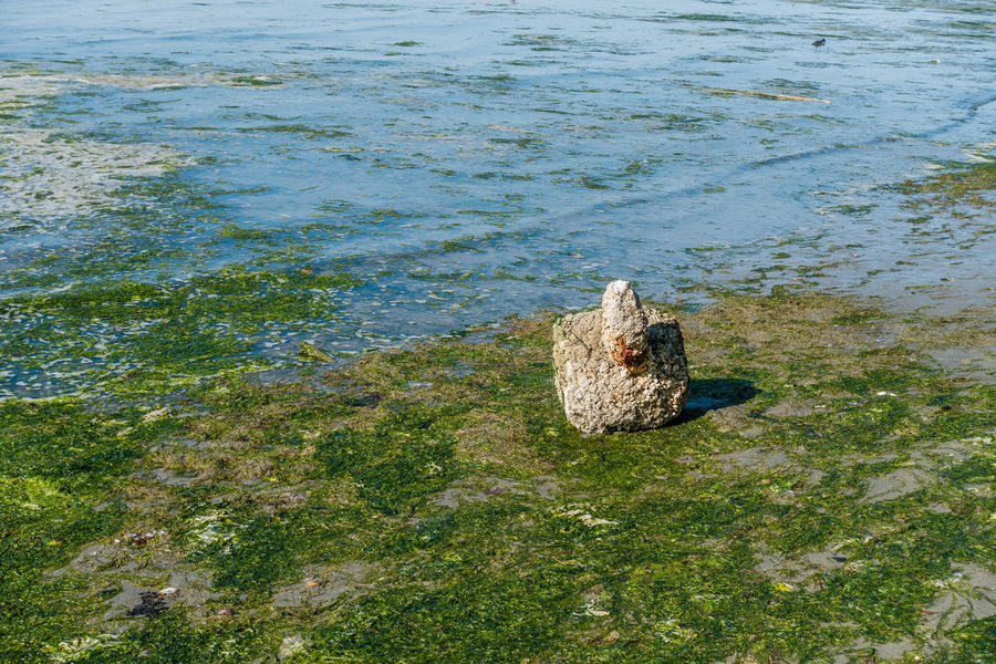 An object is covered with barnacles on the shore in Dash Point, Washington. Barnacles Seaweed Animal Animal Themes Animal Wildlife Animals In The Wild Beauty In Nature Bird Dash Point Day High Angle View Lake Nature No People One Animal Outdoors Plant Rock Swimming Vertebrate Water
