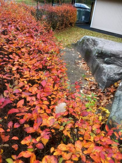 Autumn Nature Change Leaf Beauty In Nature Outdoors No People Fallen Growth Fallen Leaf Water Day Fall Tree Fragility Maple Leaf Close-up Grass Freshness Garden Path Autumn🍁🍁🍁 Autumn Colors Autumn Leaves Autumn Autumn Collection