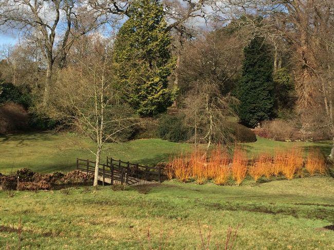 Orange Spiky Beauty Everywhere Nature Bridge Nearly Spring Sunshine Savill Gardens Tree Colourful Green